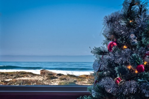 Tree With A View - Monterey