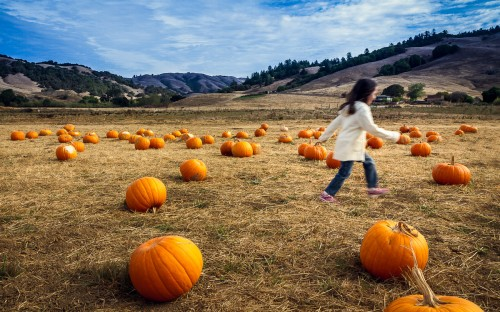 Find A Pumpkin, Pick It Up - Nicasio, CA
