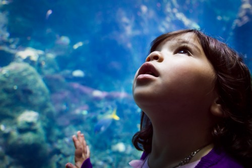 Under The Sea - San Francisco, CA - family photography